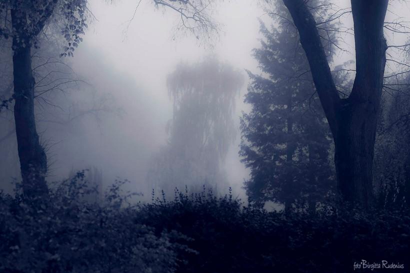 Blue Misty Day