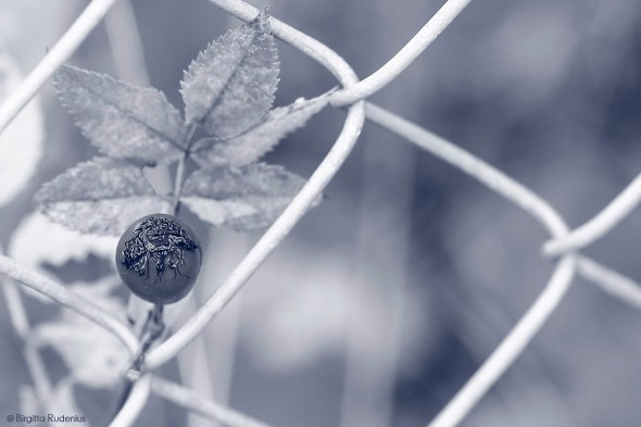 Blue Fence Force