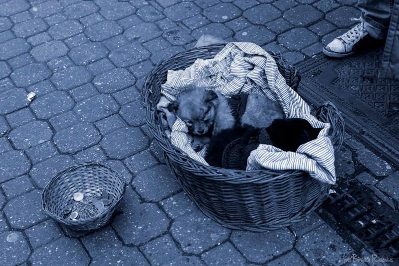 Blue Street Puppies