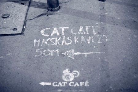 Blue Cat Café in Budapest
