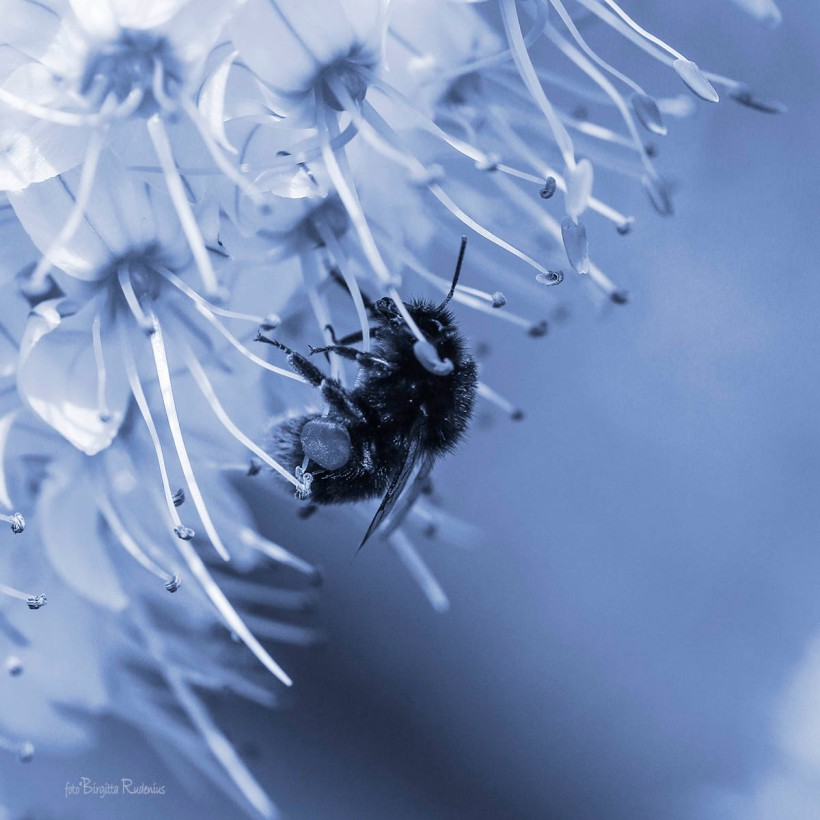 Blue Bee World