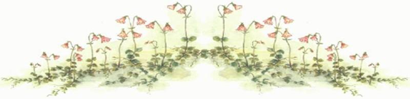 Linnaea borealis