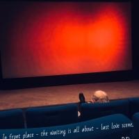 Last Love Scene