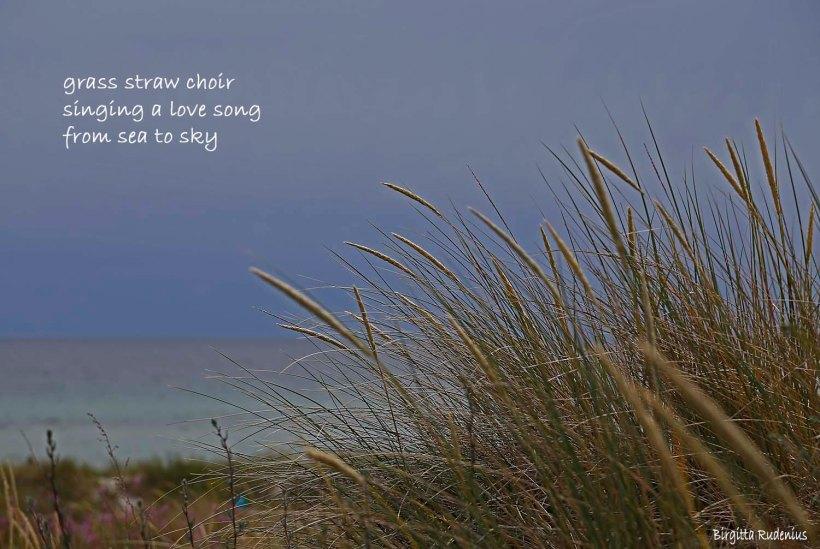 #haiku #haiga ©Birgitta Rudenius