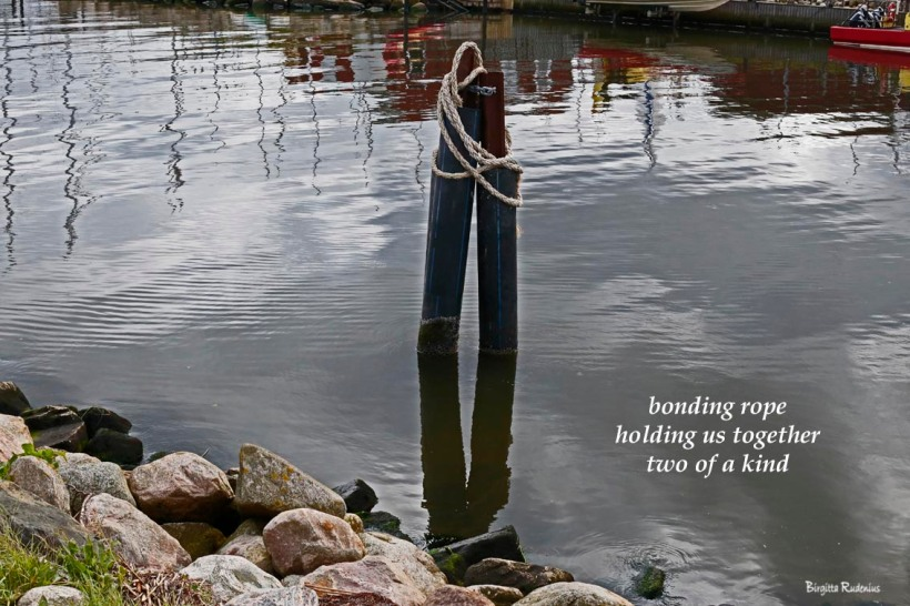 #haiku #haiga © Birgitta Rudenius