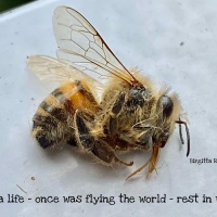 Rest in Wings